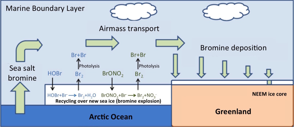 Figure 2 – Bromine enrichment and transport. Bromine originates from the ocean surface, but is concentrated by sunlight-driven chemical reactions occurring above seasonal sea ice. The enriched bromine is transported over the Greenland ice sheet and deposited onto the snow surface.